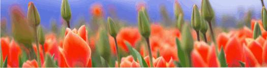 4 • Umidificatore Aromaterapia serie i9